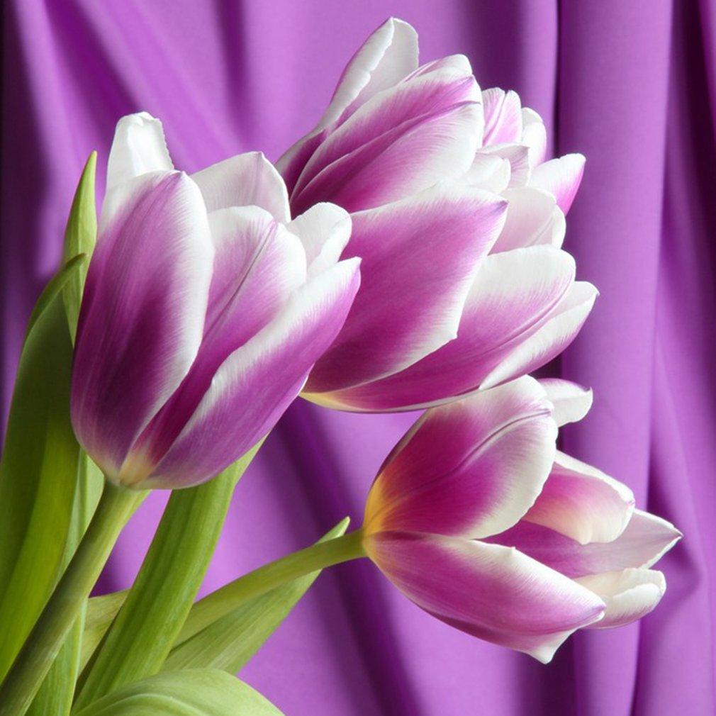 Beautiful Perfume Tulip Seeds High-Grade Flower Bonsai Seeds for Home Garden
